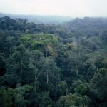 angola_maiombe_forest