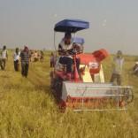 Mhoje_ricetechnology_photo_jpg