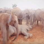 Mhoje-elephants_photo_jpg