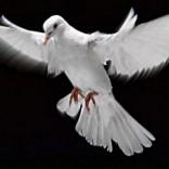 Mhoje_peaceaccords_photo_jpg