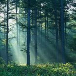 Mhoje_forestry_photo_jpg