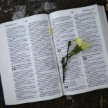 A flower is left on the page of an open Bible outside the Medi-Clinic Heart Hospital, in Pretoria June 28, 2013. REUTERS/Dylan Martinez