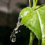 leaf-water-nature-green-crystalline-wallpaper