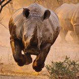 rhino.run
