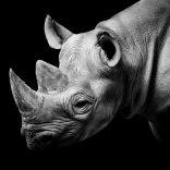 rhino.twitter