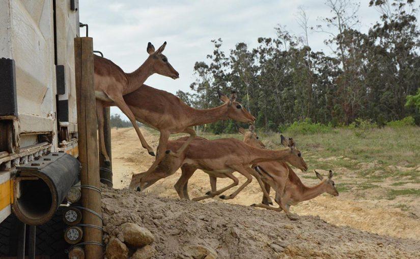 anac.gazelles
