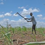 mozambique_farming.land.machamba