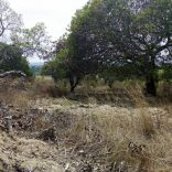 nampula,forest,logging.dw