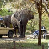 elephant-at-the-lodge