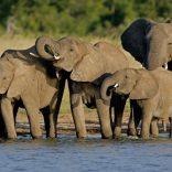 elephants.file