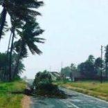 cyclone.apa