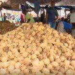 coconuts,m