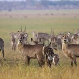 wildlife.mozambique