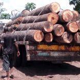 timber.logging.not