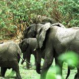Elephants.lusa_.fil_.rm_