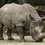 Rhinomoz.rm_