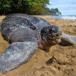 Turtlefile