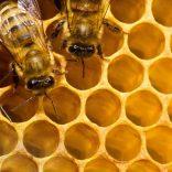 Honey.file_.