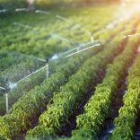 Irrigattion.shutterstock