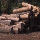 Forestry.logging