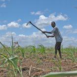 Mozambique_farming.land_.machamba