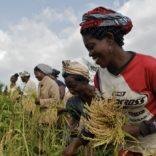 Mozambiquehungerzero