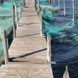 Aquaculture.file_.op_