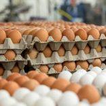 Eggsfilefile