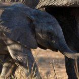 Elephantsdebeers